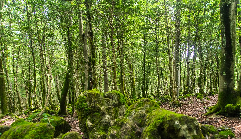 Kolchis-Wald