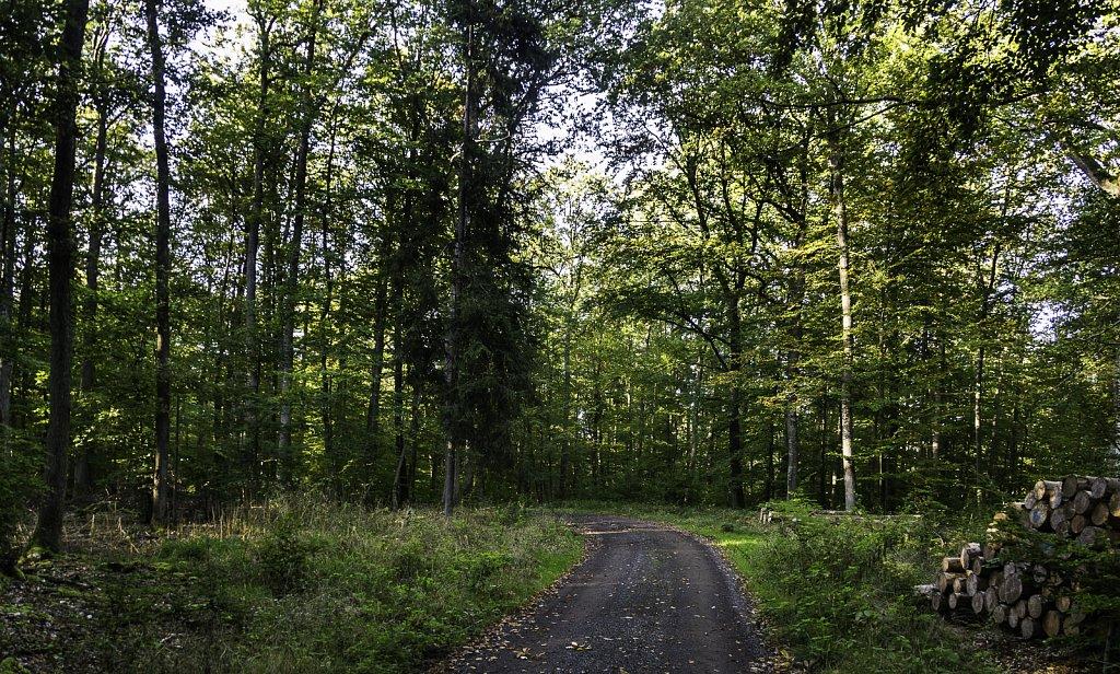 Auf dem Haßberge-Rennweg